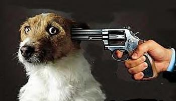 244817466_Shoot_the_dog_xlarge