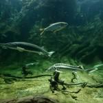 Prémium hazai természeti élmény: Tisza-tavi Ökocentrum