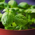 Újra divatban a gyógyító növények és a gyógynövények
