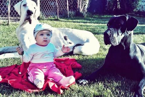 A barátságos és nagyszívű óriás – Német Dog