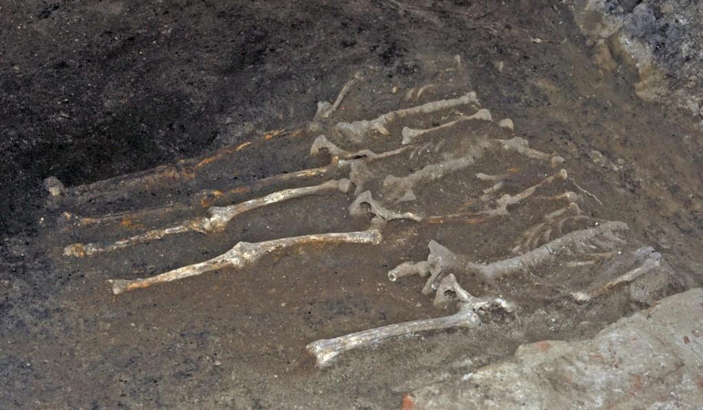 csontkicsi-1500x874