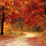 Top3 őszi úticél Magyarországon, ahol szuper programok is várnak