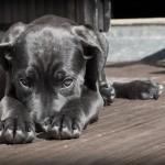Figyelj oda a kutyádra, ugyanis ő jelzi, ha valami gond van!